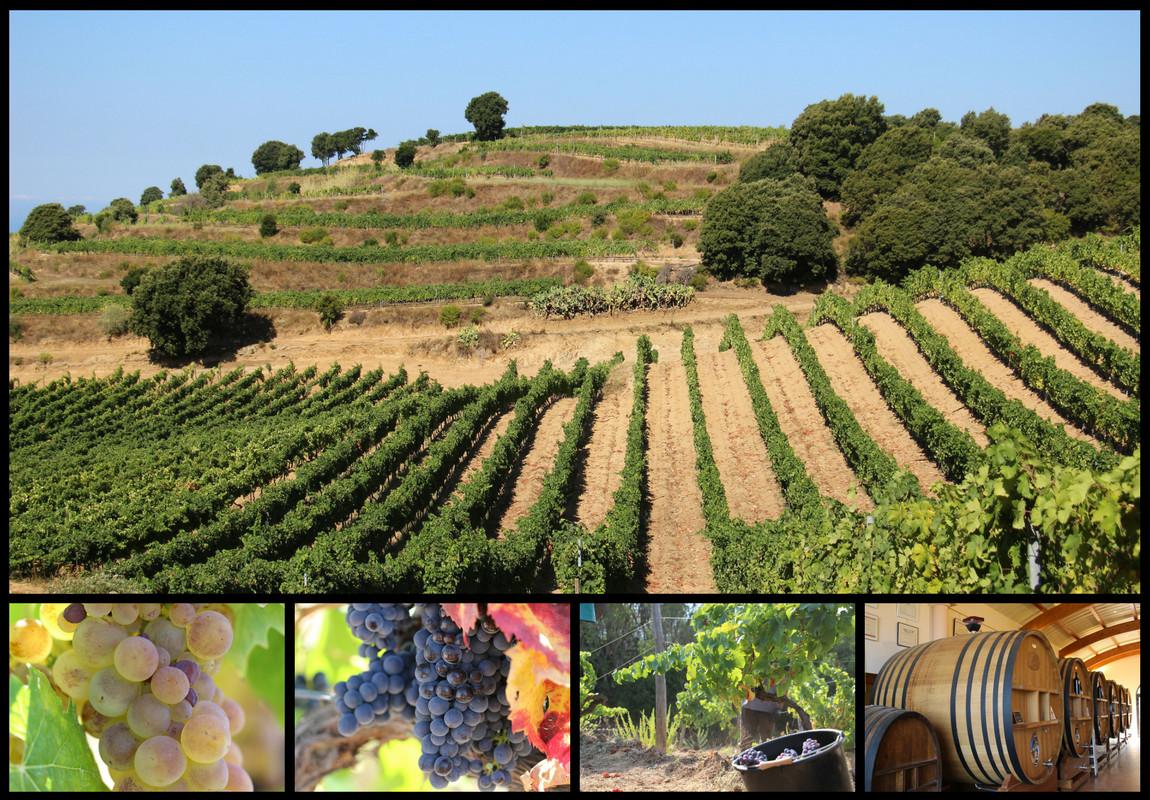 Vigne et production viticole