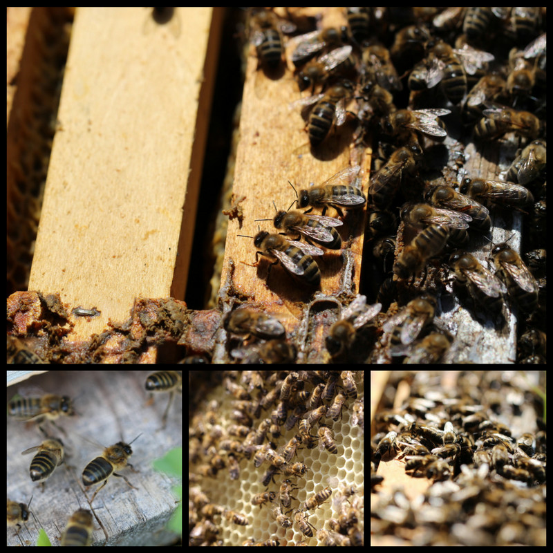 Apiculture et miel