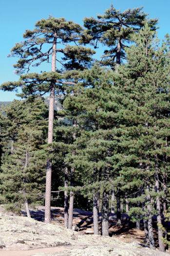 Les massifs forestiers