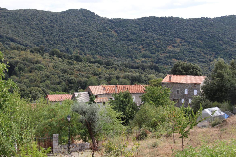 Cardo-Torgia (Cardu è Turghjà)