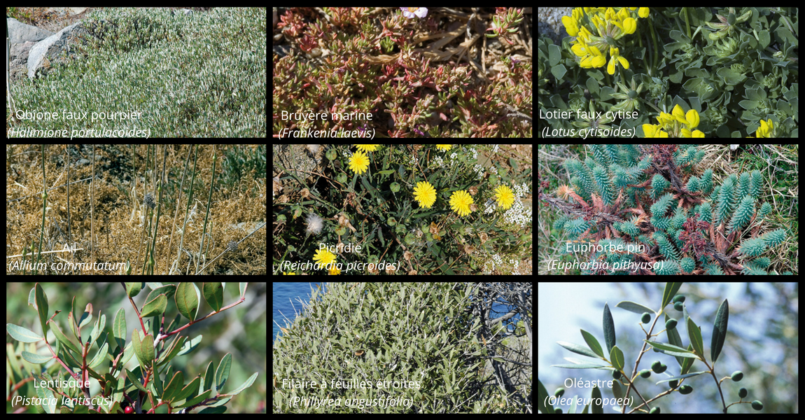 Espaces Naturels Sensibles du Golfe d'Ajaccio