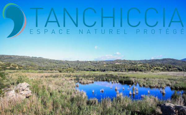 Étang de Tanchiccia